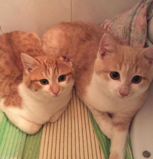 кошка, котенок, питомцы