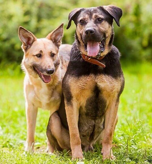 собака, бродяга, животные, улица