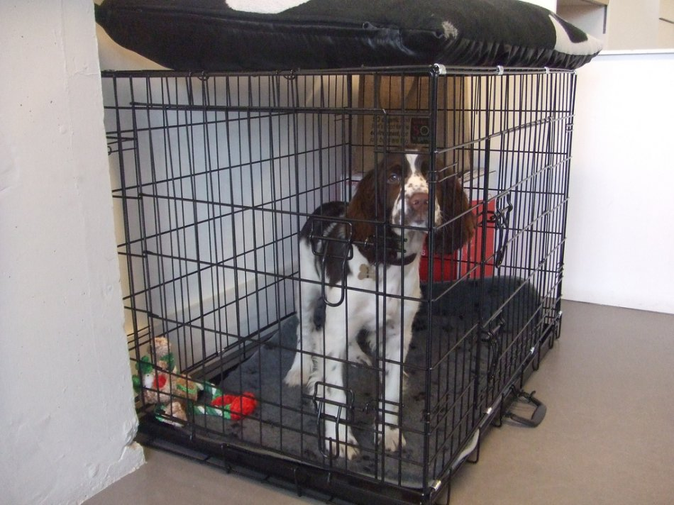 Собака в клетке фото