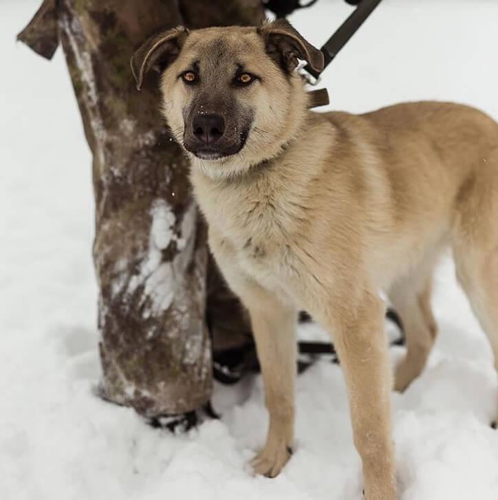 пес, кинолог, домашний питомец, зима