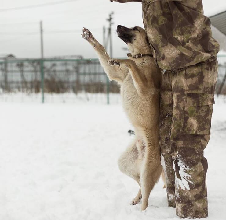 кинолог, зима, снег, занятия, кинология, собака, пес