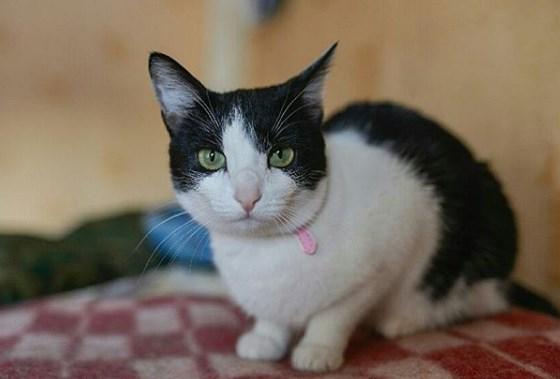 кошка, животное, дом, приют