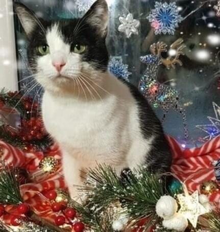 кошка, праздник, зверь, окно, игрушки