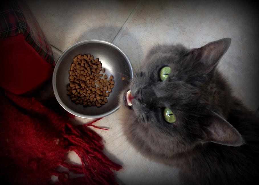 Серая кошка возле миски с кормом фото