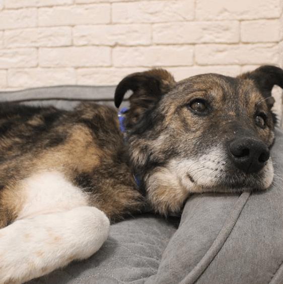 собака, диван, дом