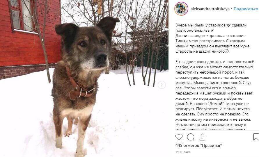 собака, улица, снег, зима