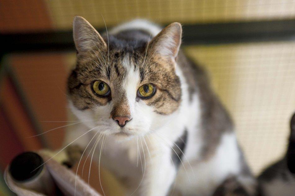 Любопытная кошка фото
