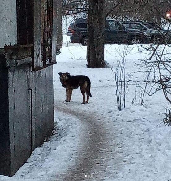 собака, бродяга, улица, зима, снег