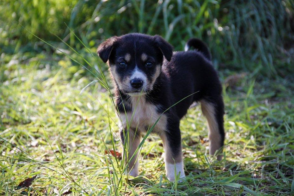 Маленький щенок стоит на траве фото