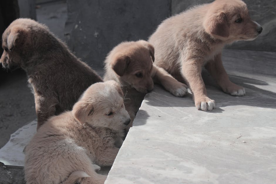 Бездомные щенки на улице фото