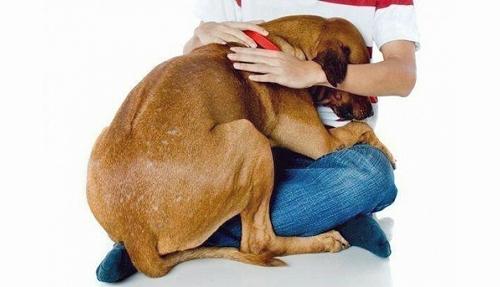 Испуганная собака прижимается к хозяину фото