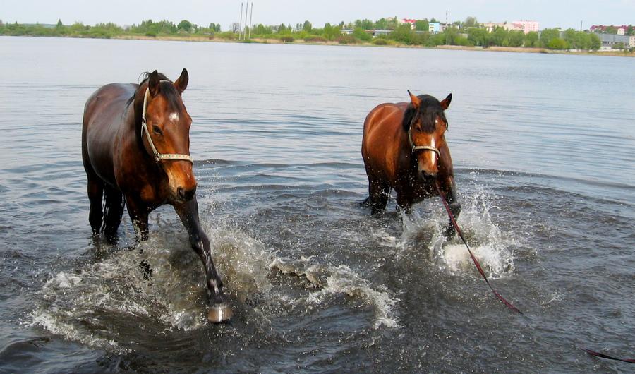Лошади купаются в озере фото