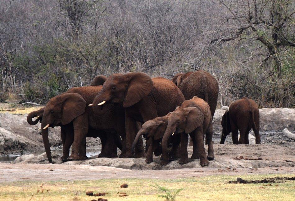 Африканские слонихи со слонятами фото