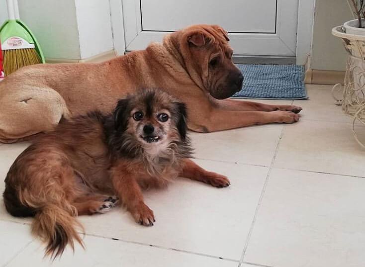 собаки, балкон, квартира, пес, домашний любимец