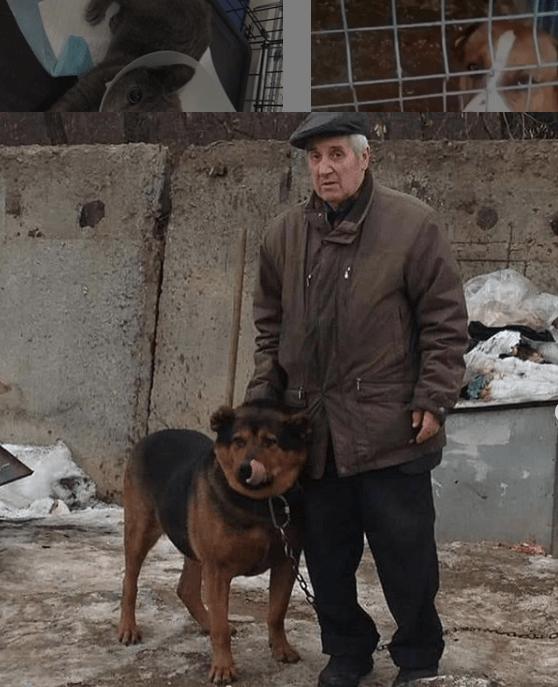 собака, человек, улица, будка, цепь