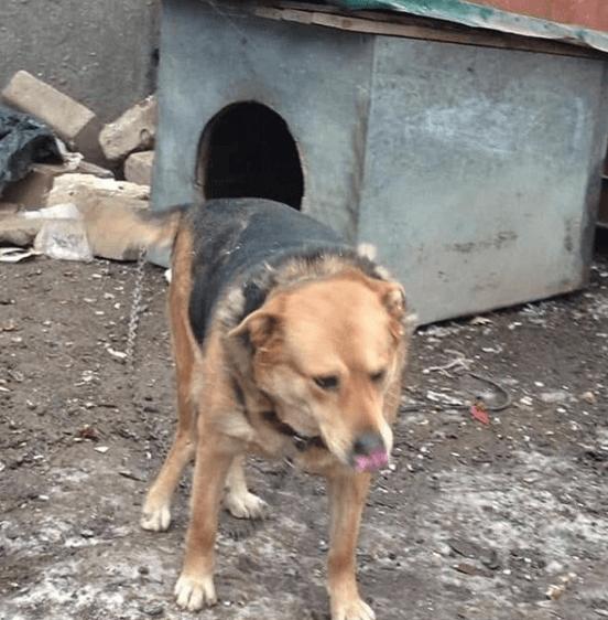 собака, будка, улица, стройка, охранник