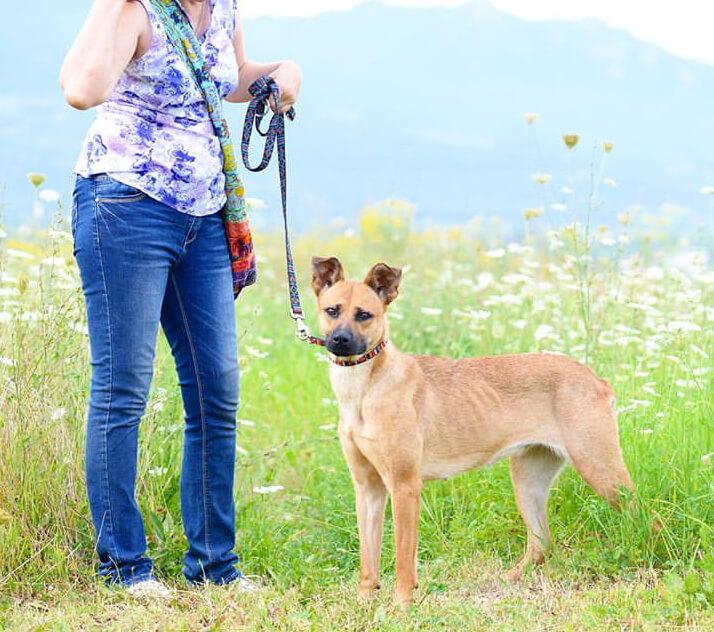собака, лето, поле, трава, кинолог