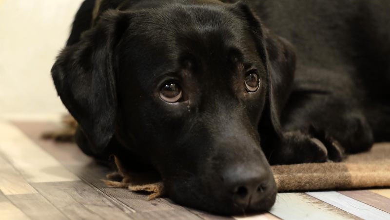 Грустная черная собака фото