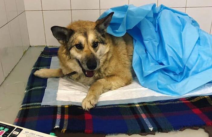 собака, пес, ветеринарная клиника, клиника