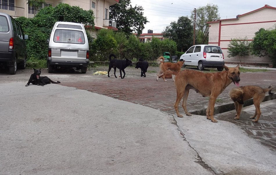 Стая бездомных собак фото