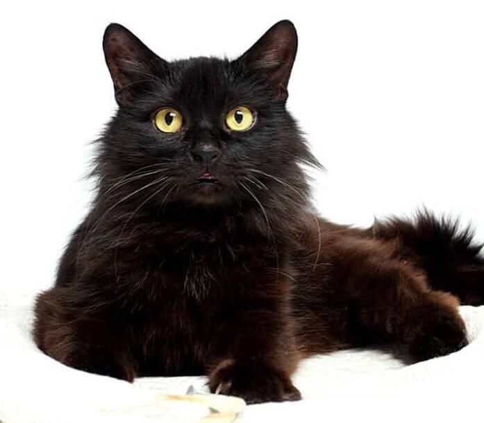 кот, кошка, домашний питомец