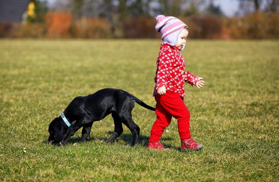 Ребенок и щенок идут в разные стороны фото