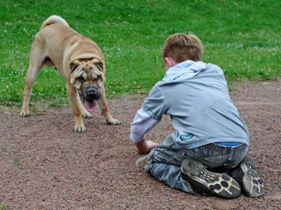Ребенок и собака напротив друг друга фото