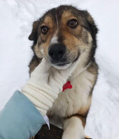 собака, адресник, снег, зима, рука