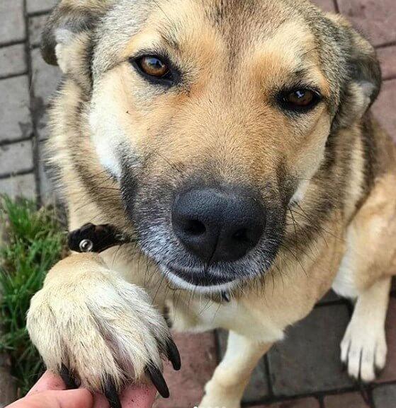 собака, лапа, рука, улица