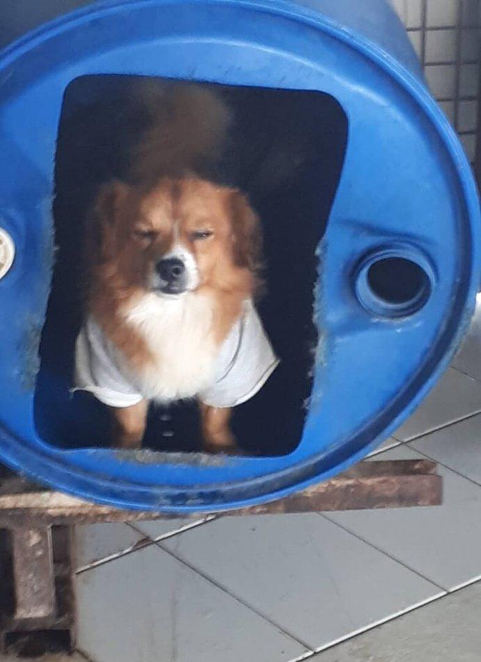 собака, бочка, будка, приют