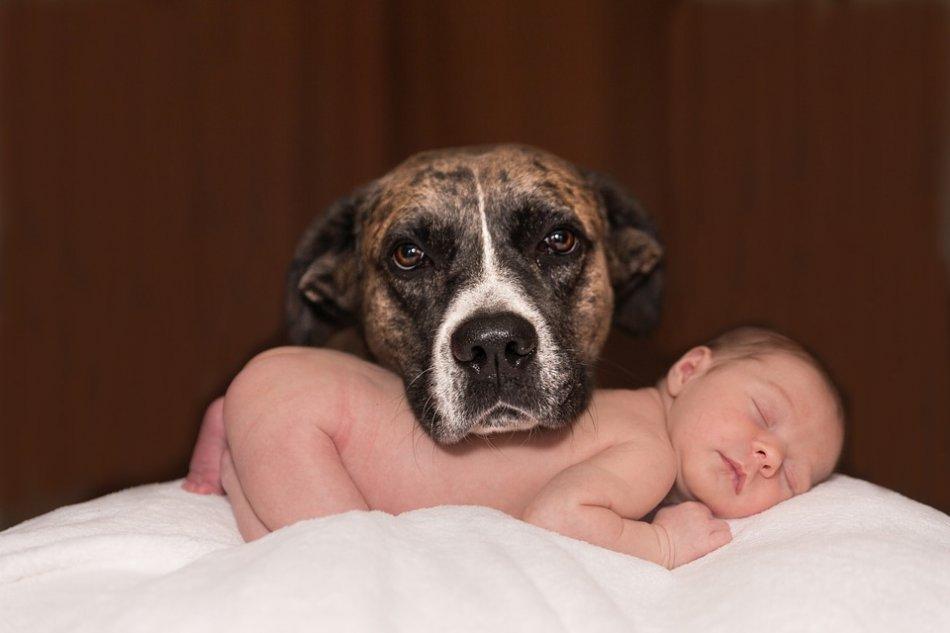 Собака и новорожденный ребенок фото