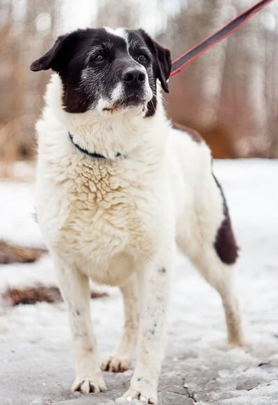 собака, улица, зима