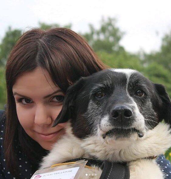 человек, собака, домашний питомец