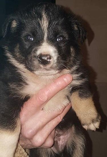 щенок, животное, рука