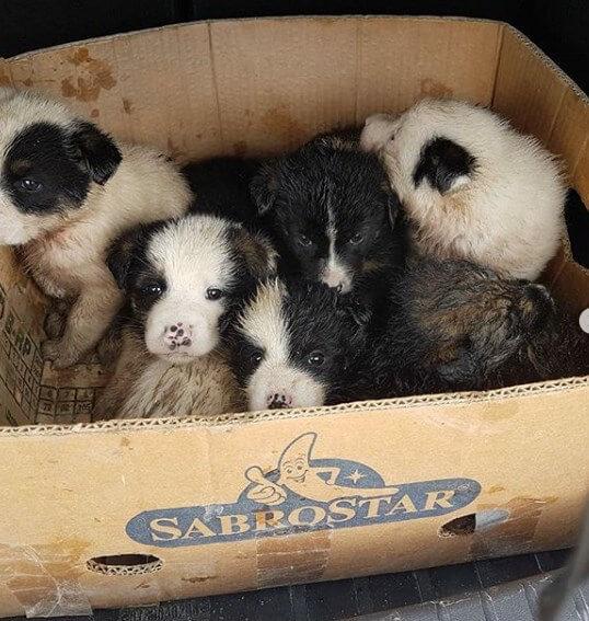 щенки, коробка, свалка