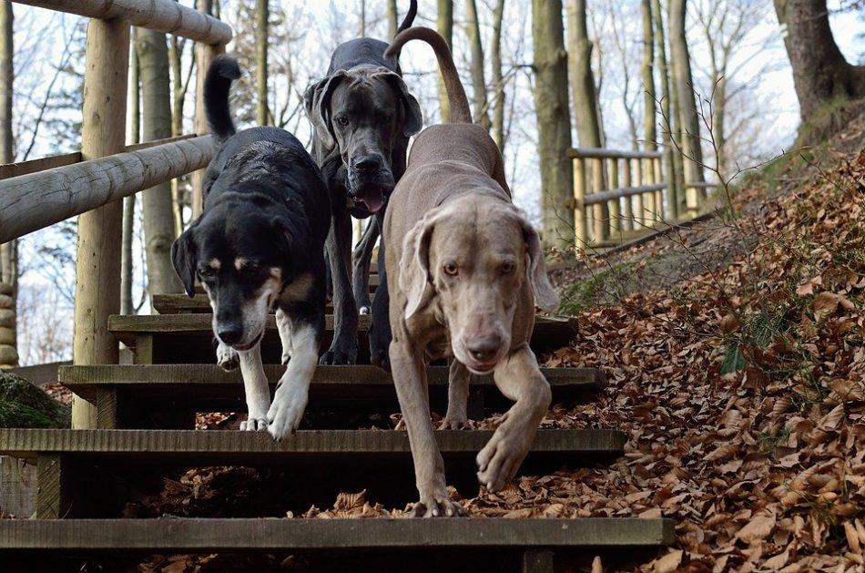 Три собаки спускаются по лестнице фото