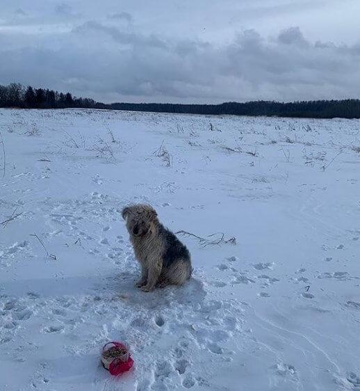 пёс, поле, следы, корм, лес, зима, снег