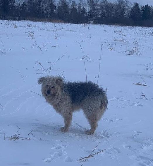 собака, поле, зима, снег