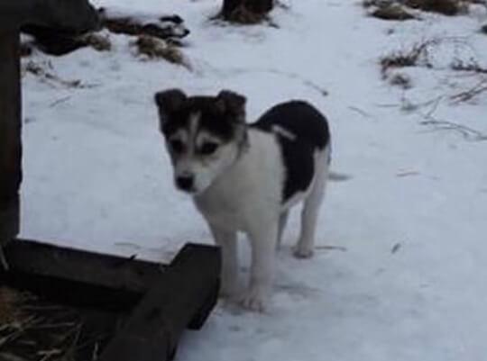 щенок, собака, зима, снег, дом, пес, домашний любимец
