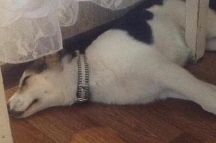 щенок, стол, сон, паркет, собака, дом