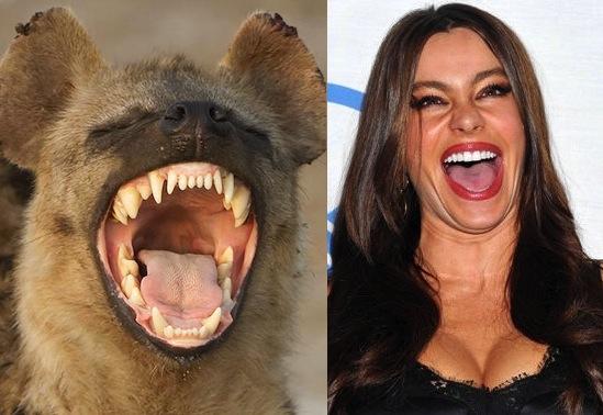 Знаменитости похожие на животных фото