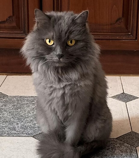 кошка, дом, пол, плитка, кухня