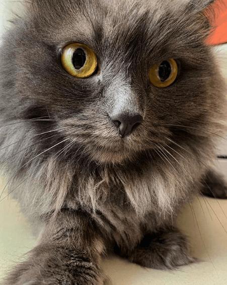 кошка, глаза, желтый взгляд, дом