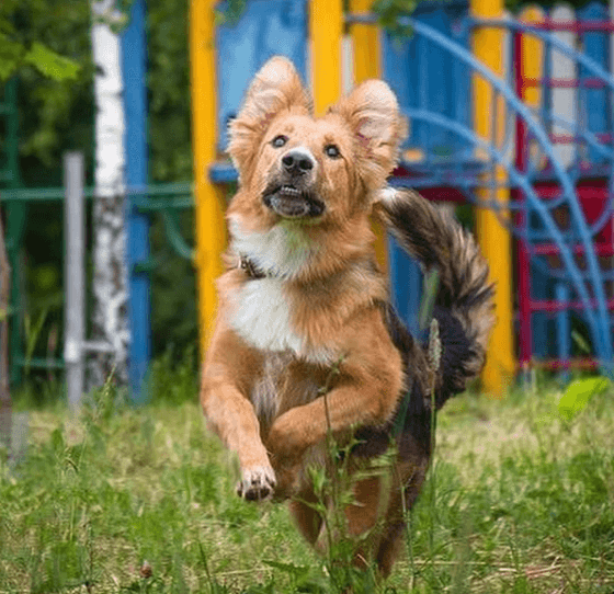 собака, площадка, двор, прогулка