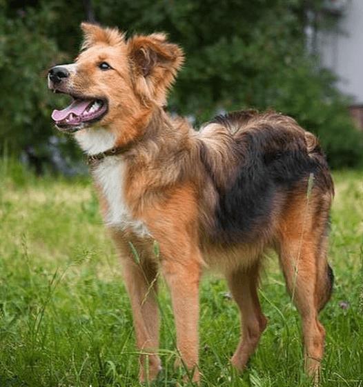 собака, улица, прогулка