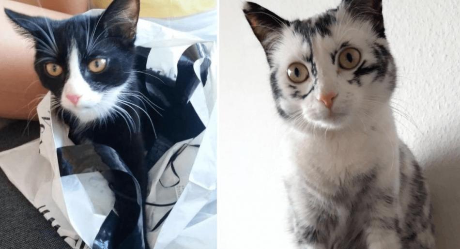 кошки, домашний питомец, черный кот, белая кошка