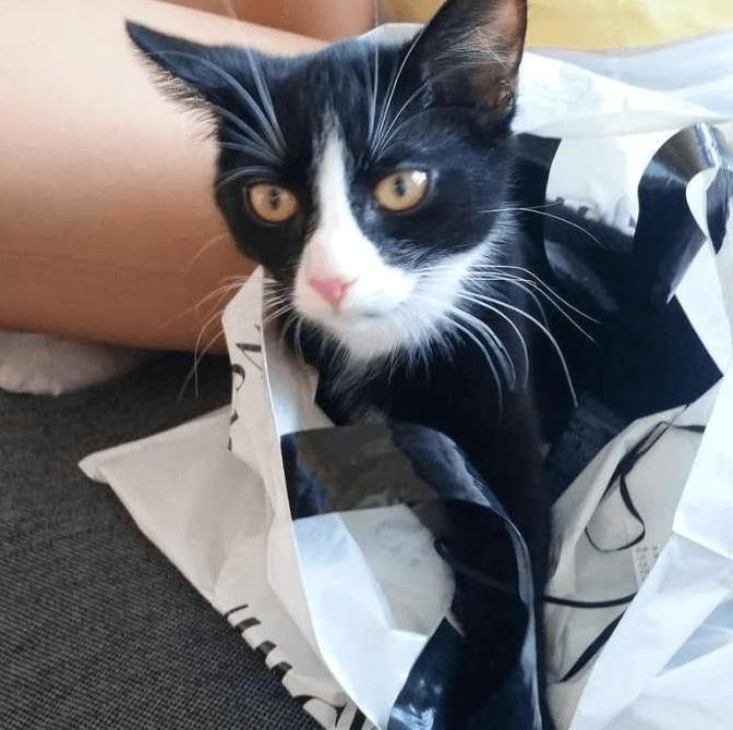 кот, кошка, черная кошка, пакет