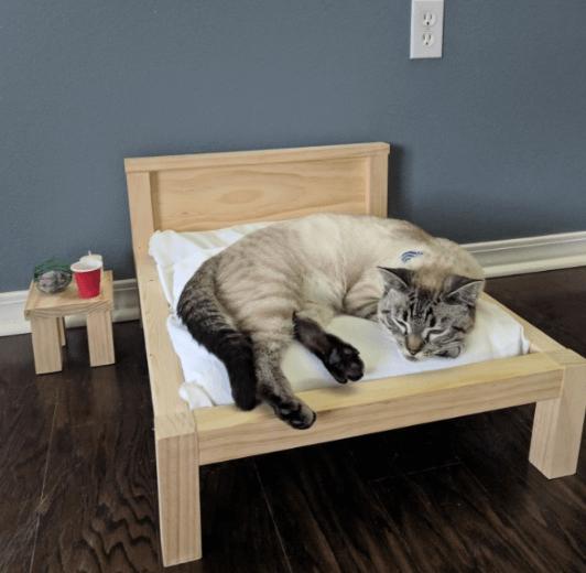 сон, отдых, кровать, мебель, тумбочка, питомец, постельное белье
