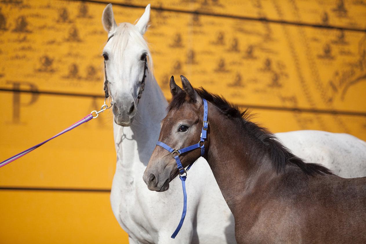 Иппосфера 2019 - международная конная выставка