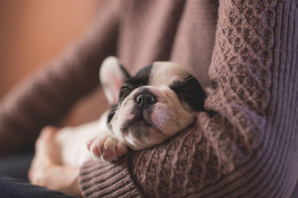 милый щенок уснул на руках фото